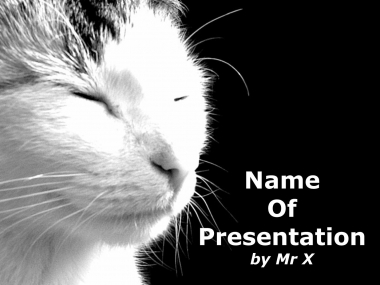 White cat Powerpoint Template image
