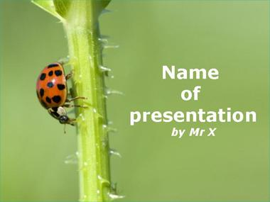 A ladybird on a branch Powerpoint Template
