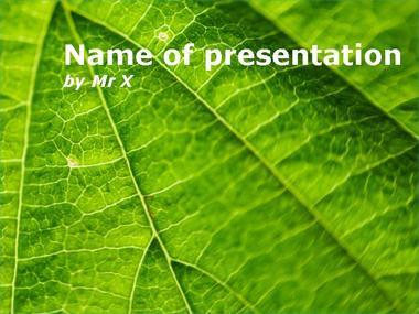 Fern Leaf Powerpoint Template image