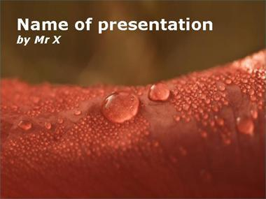 Water Drops on a red leaf Powerpoint Template image