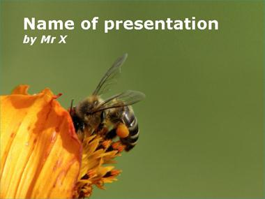 Insect powerpoint templates bee at work powerpoint template toneelgroepblik Images