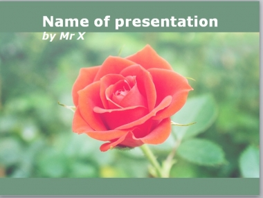 A Red Rose Powerpoint Template